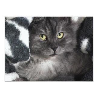 Snuggle Grey Cat Card