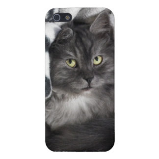 Snuggle Grey Cat iPhone 5/5S Covers