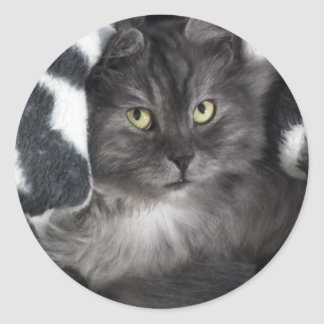Snuggle Grey Cat Sticker