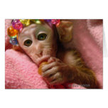 Snuggle Monkey Greeting Cards