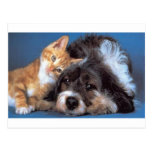 Snuggle Puppy and Kitten Postcard