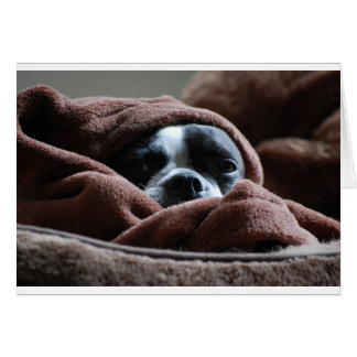 Snuggle up Boston Terrier Card
