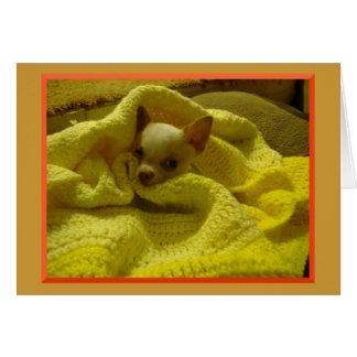 Snuggled Chihuahua Greeting Card