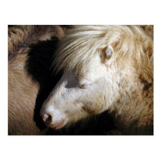 Snuggled pony postcard