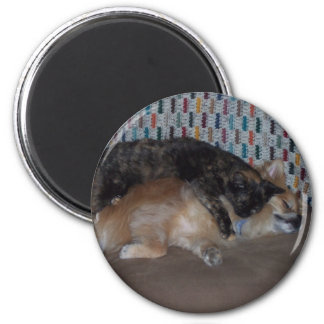snuggles 2 inch round magnet