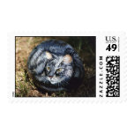 """Snuggles"" cat rock stamp"