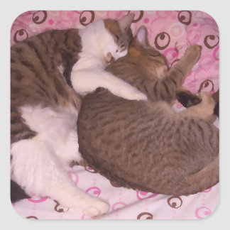 Snuggling Cats CricketDiane Art & Photography Square Sticker