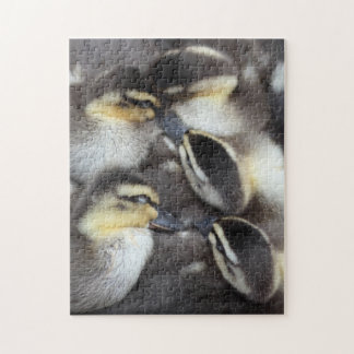Snuggling Ducklings Jigsaw Puzzle