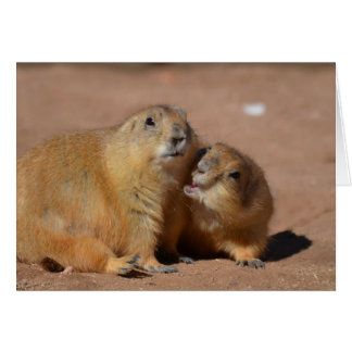 Snuggling Prairie Dogs Card