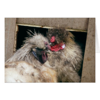 Snuggling Silkie Chickens Hens - Poultry Greeting Cards