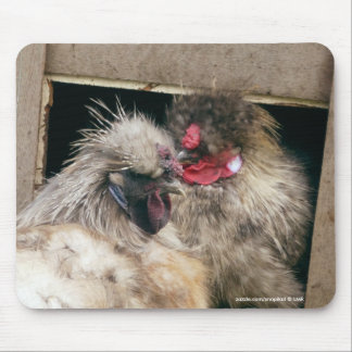 Snuggling Silkie Chickens Hens - Poultry Mousepad
