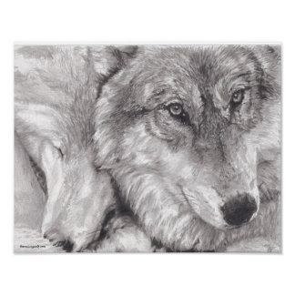 Snuggling Wolves Poster