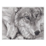 Snuggling Wolves Print