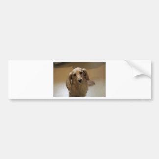 So Cute Dachschund Puppy Bumper Sticker