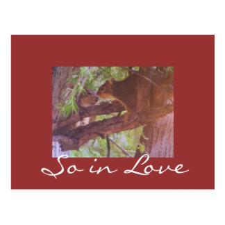 So in Love Postcard