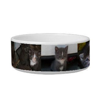 SO MANY CATS! cat bowl