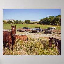So Many Horses // Three Rusty Cars
