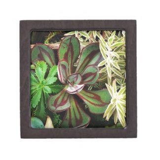 So pretty Succulent plants  #succulent Premium Keepsake Box