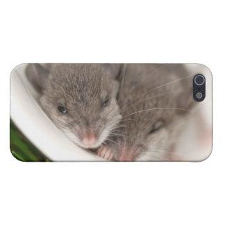 So Sleepy Baby Mice Case For iPhone SE/5/5s