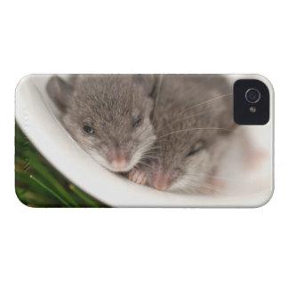 So Sleepy Baby Mice Case-Mate iPhone 4 Case