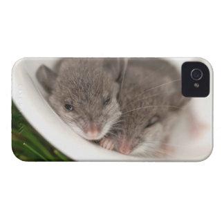 So Sleepy Baby Mice iPhone 4 Covers