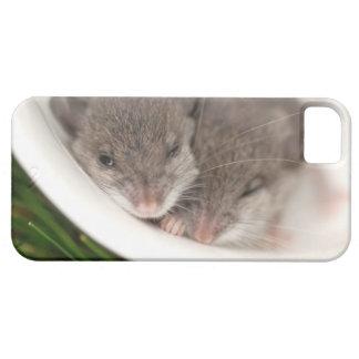 So Sleepy Baby Mice iPhone SE/5/5s Case