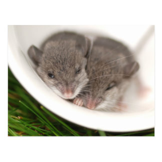 So Sleepy Baby Mice Postcard