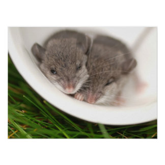 So Sleepy Baby Mice Poster