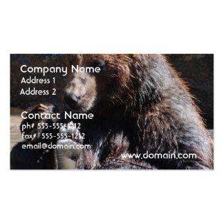 Soaking Bear Business Card