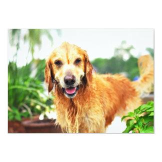 Soaking Wet Golden Retriever Card