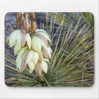 Soaptree Yucca Flowers In The Upper Missouri Mouse Pad