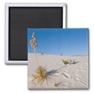 Soaptree Yucca, long Shadow, Transverse Dunes 2 Inch Square Magnet