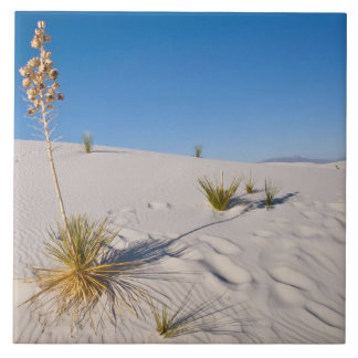 Soaptree Yucca, long Shadow, Transverse Dunes Ceramic Tile
