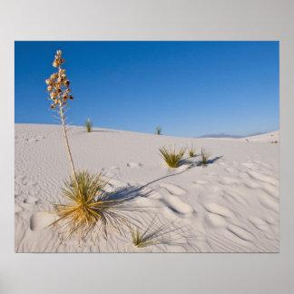 Soaptree Yucca, long Shadow, Transverse Dunes Poster