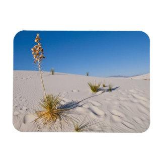 Soaptree Yucca, long Shadow, Transverse Dunes Rectangular Photo Magnet