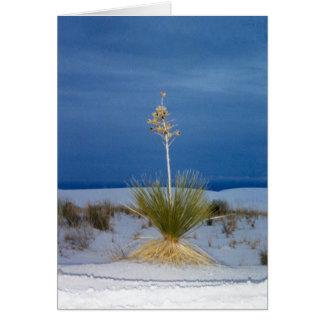 Soaptree Yucca Plant Card