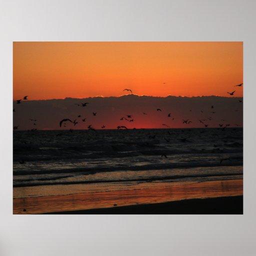 Soar Birds Print