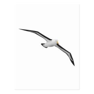 Soaring Albatross Bird Postcard