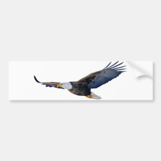 Soaring Bald Eagle Bumper Sticker
