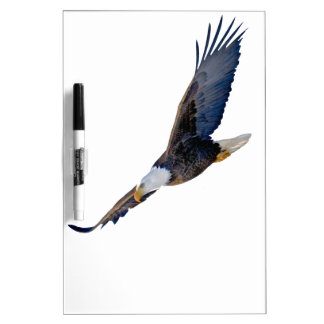 Soaring Bald Eagle Dry Erase Board