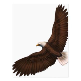 Soaring Bald Eagle Postcard