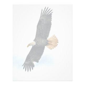Soaring Bald Eagle Wildife Photo Art Letterhead