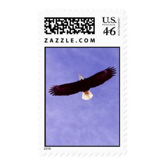 Soaring Eagle Postage Stamps
