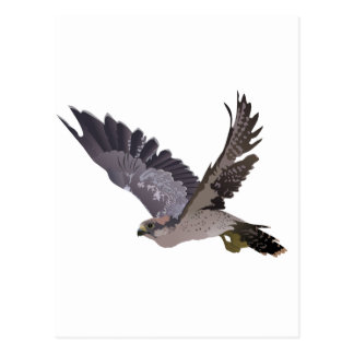 Soaring Falcon with Outstretched Wings Postcard