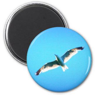 soaring gull magnet