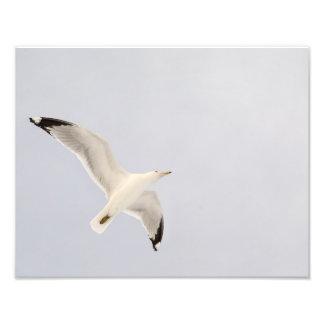 Soaring Gull Photo Print