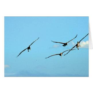 Soaring Pelicans Card