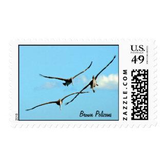 Soaring Pelicans Postage