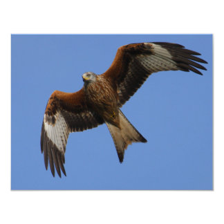 Soaring Red Kite Card