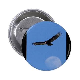 Soaring with Luna Pins